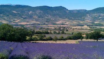Frankrijk.nl, genieten van de lavendel