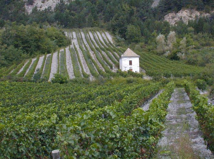Wandeling door de wijngaarden, Chatillon-en-Diois
