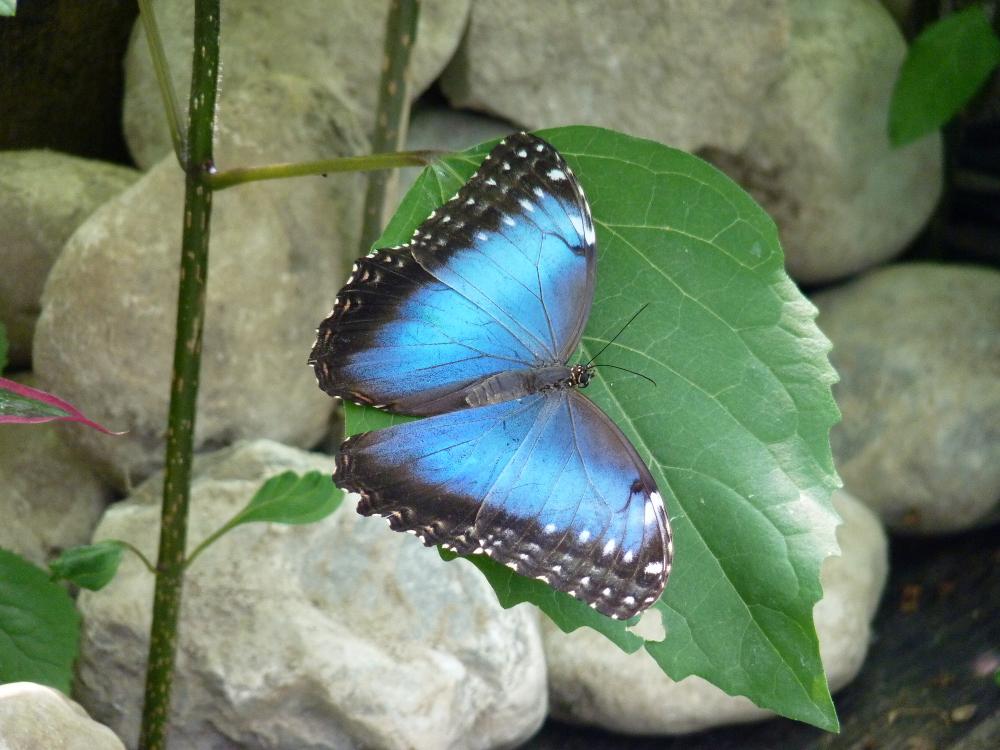 Vlindertuin Die