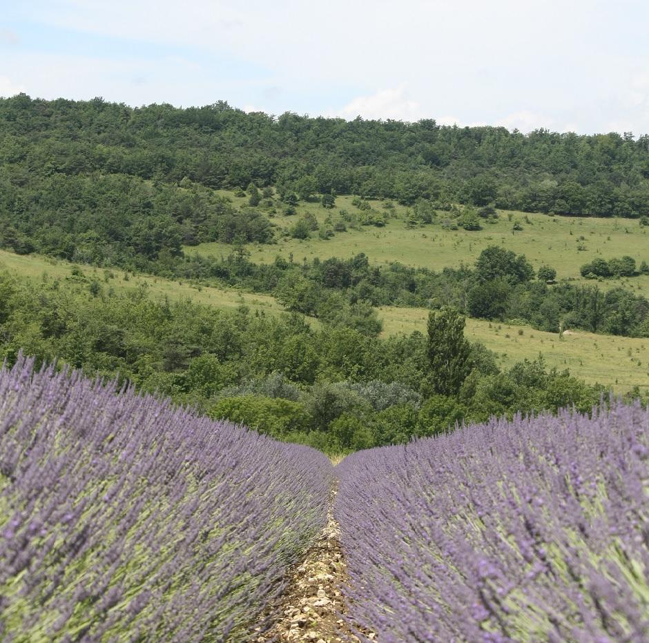 Fietstocht door de lavendelvelden (race- en tourfiets)